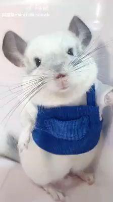 Very Cute Pet