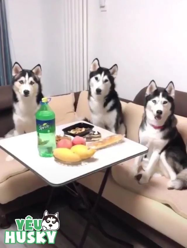 When you have three very cool dogs