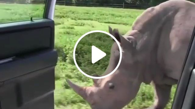 Do you recognize this trend? lol - Funny Videos - funvizeo.com - rhino, car, trend, animal, humor