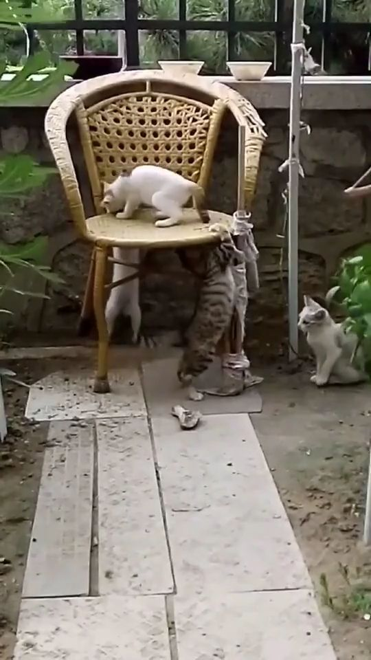 I Am KING - Funny Videos - funvizeo.com - cat, boss, pet, king