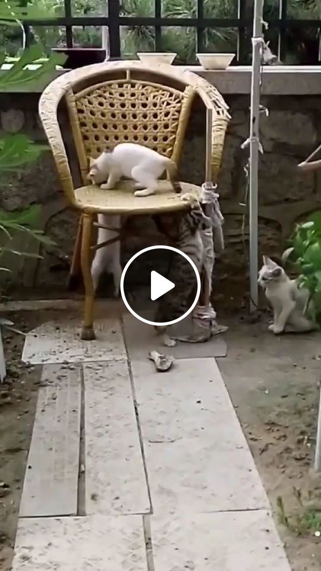 I Am KING - Video & GIFs   cat, boss, pet, king