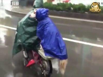 Sudden Rain - Funny Videos - funvizeo.com - raincoat, electric bicycle, rain, siberian husky, cute pet