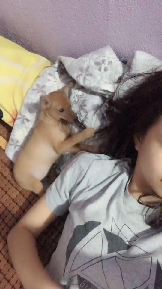 Mischievous puppy - Funny Videos - funvizeo.com - puppy, mischievous, funny pet, funny dog, hair, bite, cute puppy