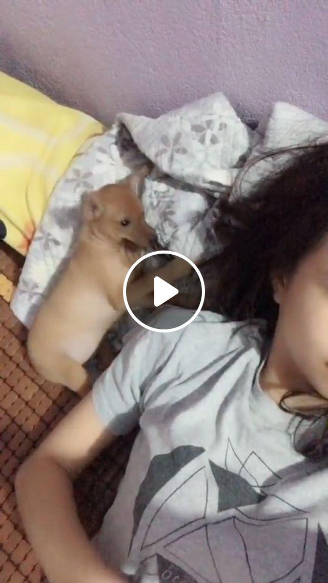 Mischievous Puppy - Video & GIFs | puppy, mischievous, funny pet, funny dog, hair, bite, cute puppy