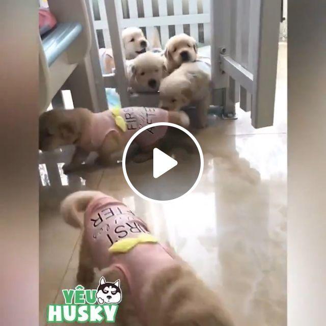 Preschool - Video & GIFs | dog, puppies, adorable, pet
