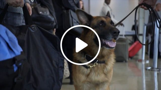Way not to police suspect: calmness, LOL, security, airport, luggage, smart dog, crime, funny