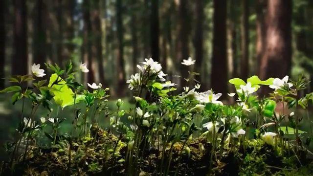 Plant growth GIFs