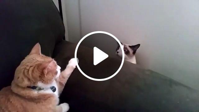 Sneaky Cat, cat, pet, sneaky