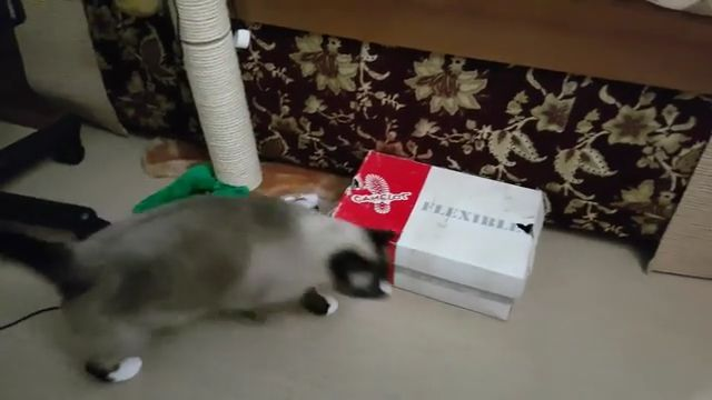 Art of cat hiding