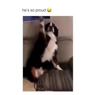 He's so proud, LOL - Funny Videos - funvizeo.com - funny dog videos, funny pet videos, mischievous