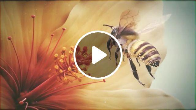 Beautiful Nature, beautiful nature, animal, bee, honey, pistil, flower