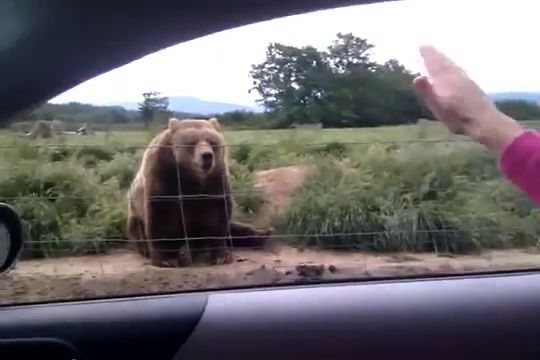 Friendly bear