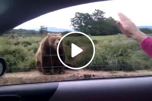 Friendly bear, funny bear gifs, wild animal, hand, bear