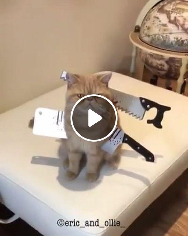 Cool Cat Halloween Costume, cat, costume, pet