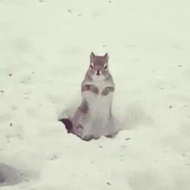 Winter Dance - Video & GIFs | squirrel, winter, dance, animal, snow
