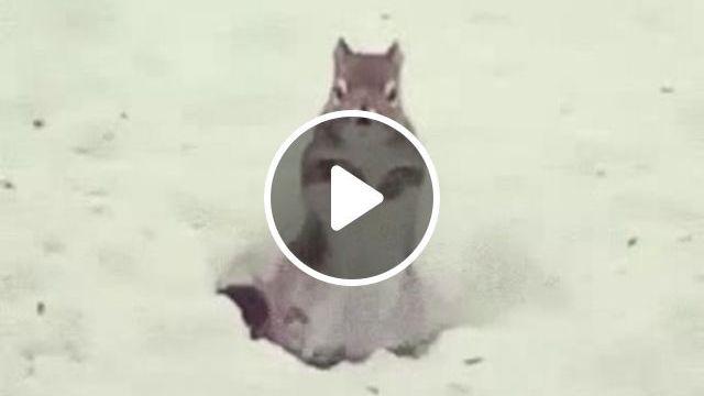 Winter Dance, squirrel, winter, dance, animal, snow
