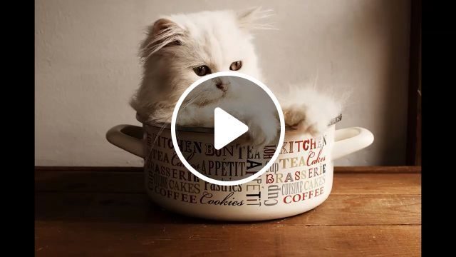 Beautiful Baby Cute Cat Pictures - Funny Videos - funvizeo.com - baby,cute cat,pet,funny cat videos