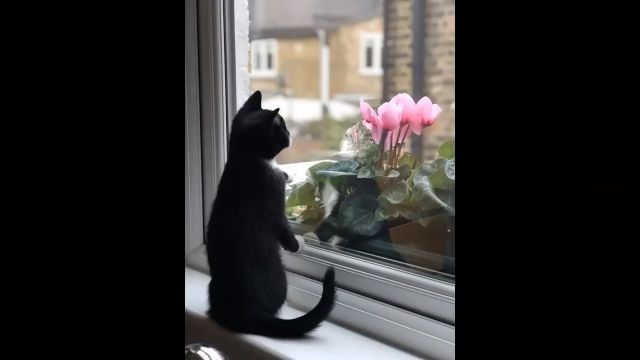 Beautiful Cats Baby