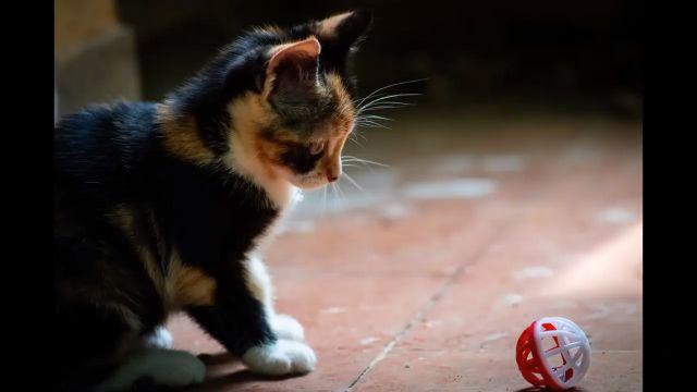 Adorable Cute Kittens - Funny Videos - funvizeo.com - adorable,kitten,cute cat,cute pet