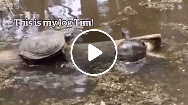 Tim Is An Idiot - Video & GIFs   turtle, funny animal videos, idiot