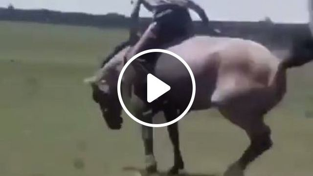 Professional Trainer - Training A Wild Horse - Funny Videos - funvizeo.com - humor,horse,ride a horse