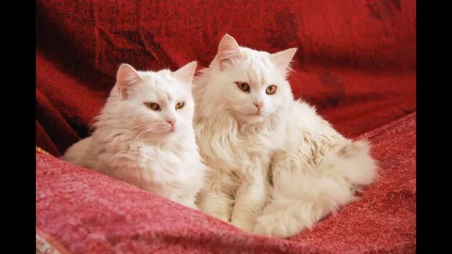 Beautiful Cute Cat Pictures - Funny Videos - funvizeo.com - cat,cute cat,funny cat,pet