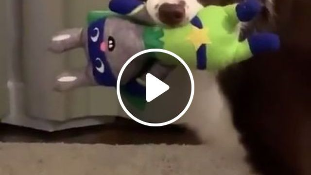 Funny Dog Videos, funny dog videos, funny pet