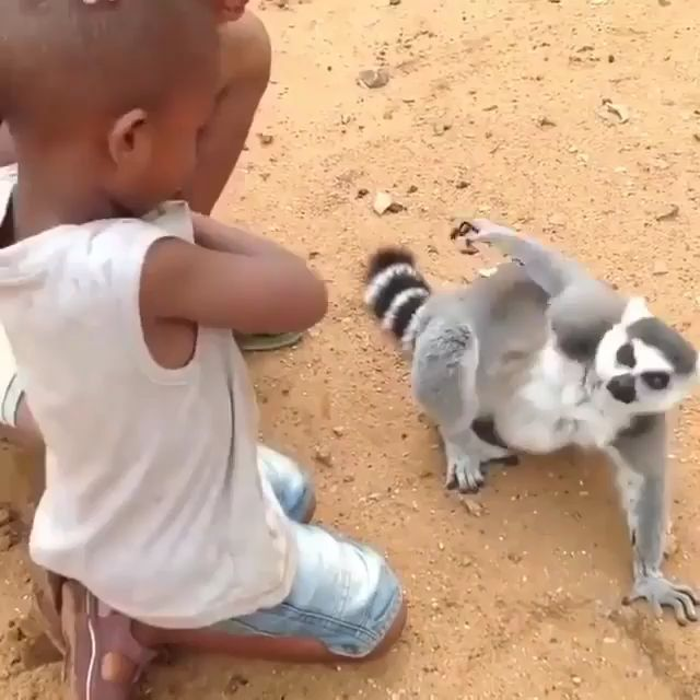 Why Does It Feel Good When Someone Scratches Your Back - Funny Videos - funvizeo.com - funny animals,lemur madagascar,itchy animals