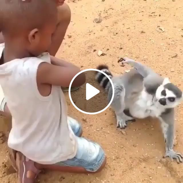 Why Does It Feel Good When Someone Scratches Your Back - Video & GIFs   funny animals, lemur madagascar, itchy animals