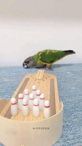 Smartest Bird Ever