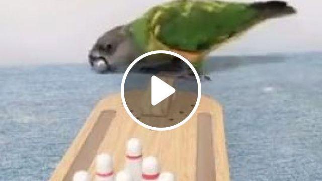 Smartest Bird Ever, funny animals, smart parrot, bird