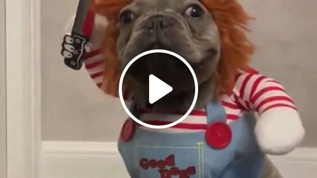 Happy Halloween - video - funvizeo.com - halloween costumes,funny pet,funny dog