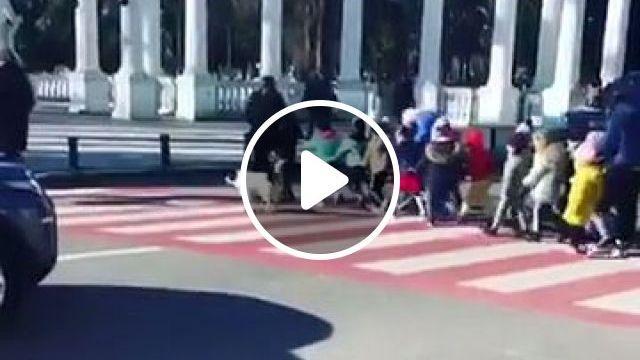Stray Dog Helps Children Cross Street Safely - Video & GIFs | traffic sign, smart dog