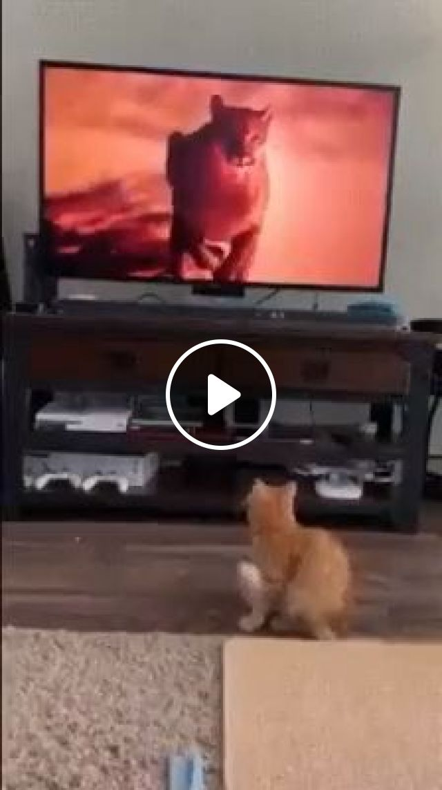 What Are Cats Scared Of - Video & GIFs   funny cats, funny cat videos, tv