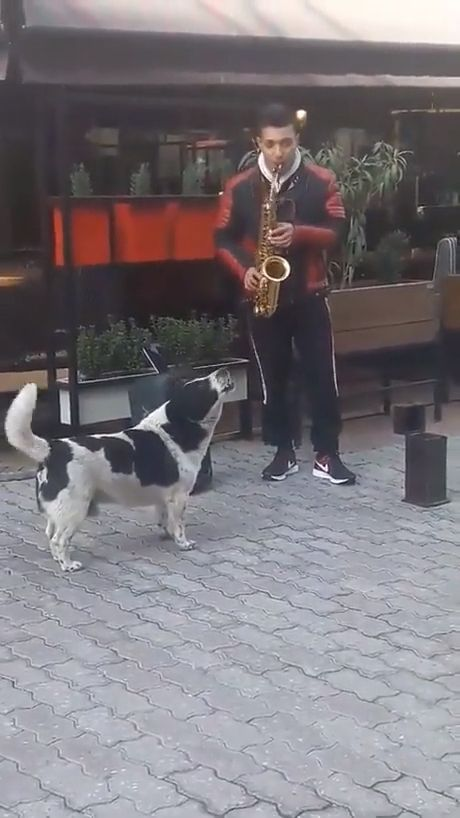 Adorable Dog Sings We Are The World - Funny Videos - funvizeo.com - dog howl,funny dog videos,animals,saxophone
