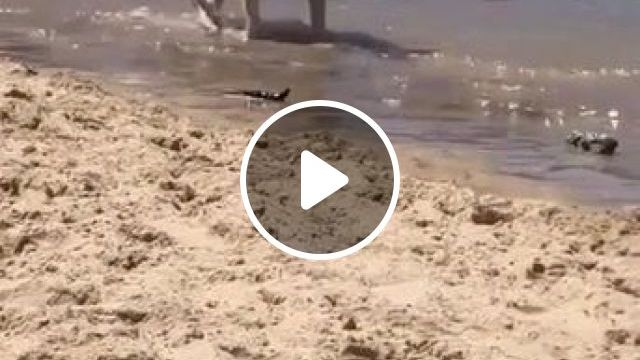 Cool dog at the beach - Funny Videos - funvizeo.com - funny dog videos,funny pet videos,sunglasses,beach