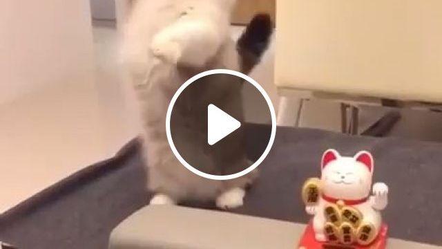 Maneki Neko And Cute Cat - Funny Videos - funvizeo.com - cute baby animals,kittens cutest,cute cats,lucky cat