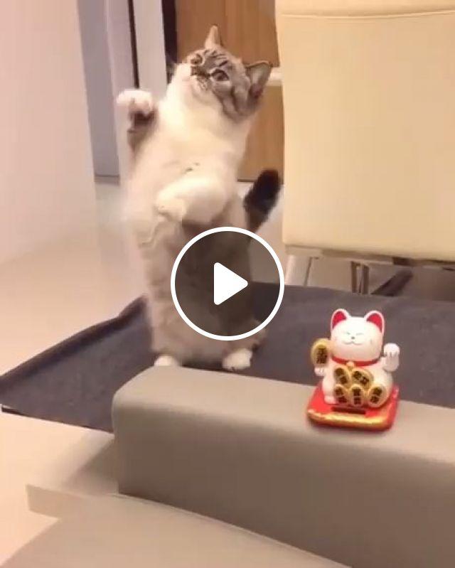 Maneki Neko And Cute Cat - Video & GIFs | cute baby animals, kittens cutest, cute cats, lucky cat