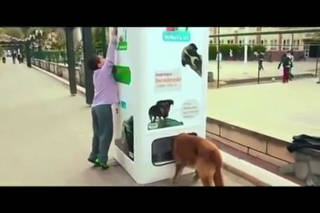 Recycling Bottles in This Machine Feeds Stray Dogs