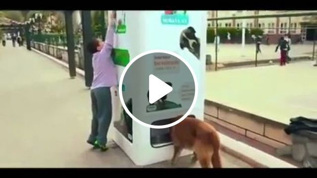 Recycling Bottles in This Machine Feeds Stray Dogs, recycle plastic bottles, istanbul turkey, stray dogs, vending machine