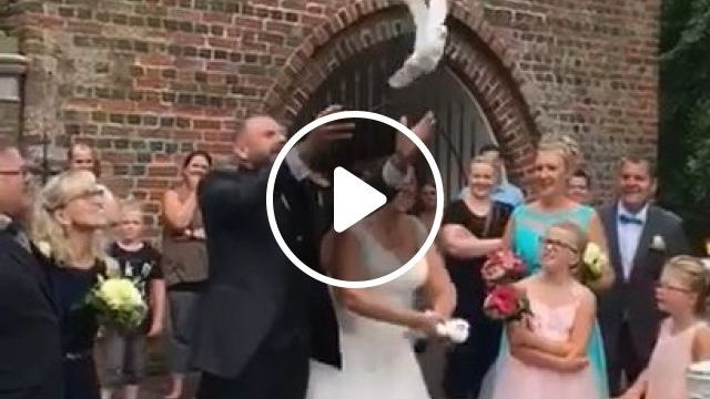 Funny - Dove release wedding tradition