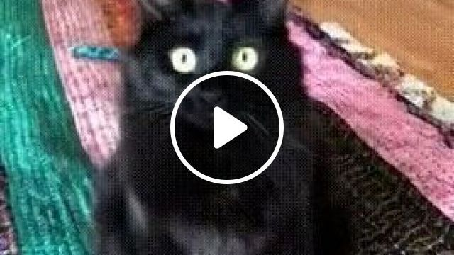 Warning: You will be hypnotized by this cat