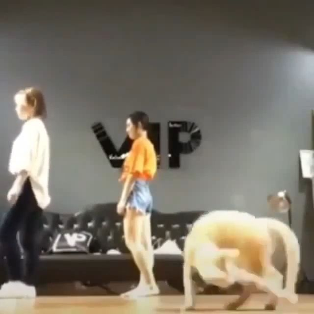 The cat dances with its tail
