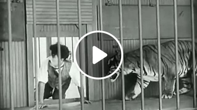 No Escape, LOL - Funny Videos - funvizeo.com - charlie chaplin,funny videos, humor, tiger, lion, circus