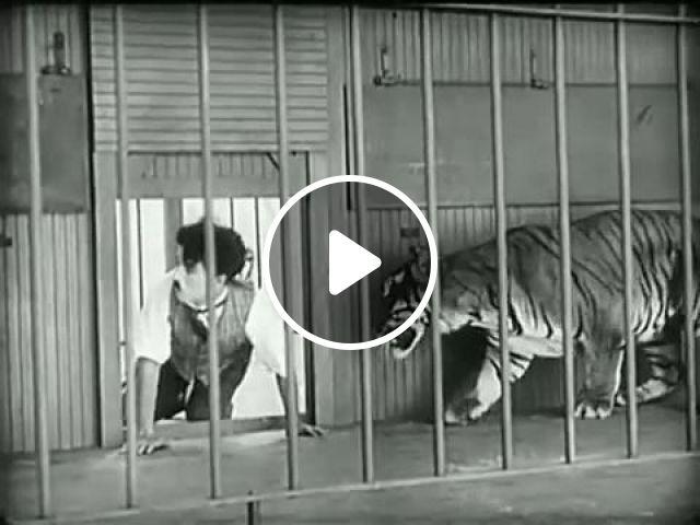 No Escape, LOL, charlie chaplin, funny videos, funny, tiger, lion, circus