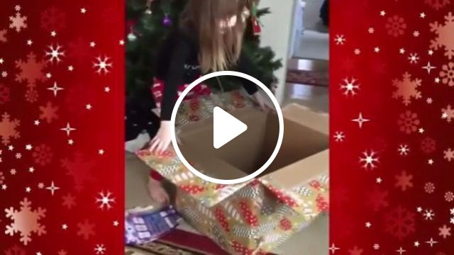 This cat's very fast, haha, cat, pet, gift, fast