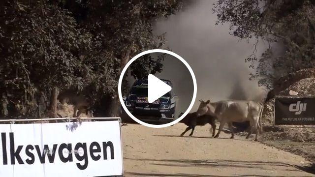 Really Lucky!, cow, racing, lucky, funny