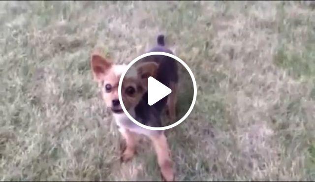 Perfect Rap Dog, funny dog, rap dog, talent, funny pet