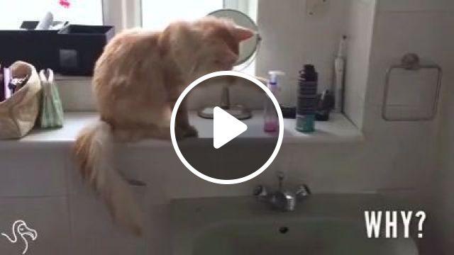 Mischievous Cats, cat, pet, mischievous