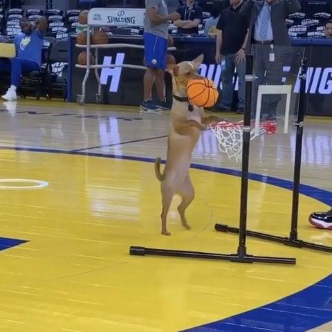 Cute dog playing basketball - Funny Videos - funvizeo.com - funny dog videos,funny pet,basketball,funny